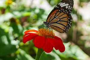 A butterfly and a fly close to a flower on Sebastian Helzle's Blog